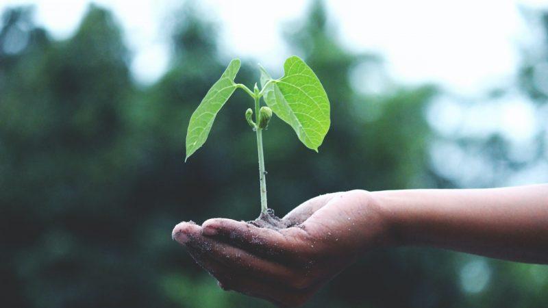 Les 10 manières de réduire votre empreinte écologique